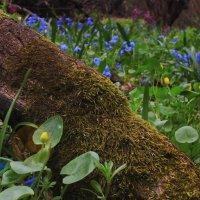 Весна :: Добрый Ёж