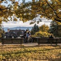 Autumn in the park/осень в парке :: Dmitry Ozersky