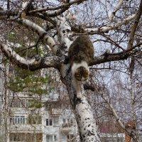 Котик который гуляет сам по себе. :: Валентина Налетова