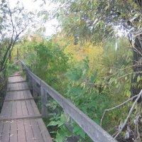 дачный мостик :: Надежда