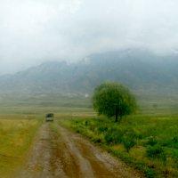 дождевой день :: Алтынбек Картабай