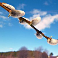 весна налаживается... :: ВладиМер