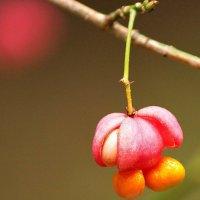 Осенние краски :: berckut 1000