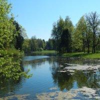 Пейзаж №1, с веткой. Подскажите, какой лучше. :: Лариса (Phinikia) Двойникова