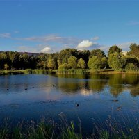Летний пруд... :: Sergey Gordoff