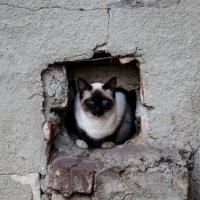 Котенок по имени Гав :: Svetlana