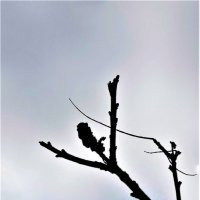 Протягивая руки к небу :: Валерий Розенталь