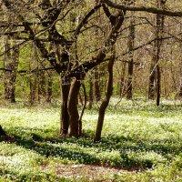 апрельский лес :: Александр Прокудин