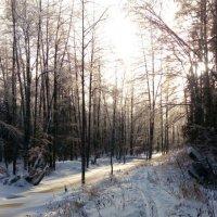 Начало зимы :: Денис