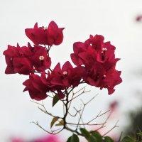 Природа разнообразна :: Валерий Подорожный
