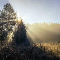 Осеннее прохладное утро. :: Сергей l