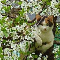 один раз в год сады цветут... :: aleksandr Крылов