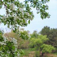 Весна :: Роман Голак