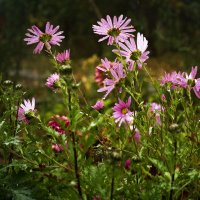 Осенние цветы :: Оксана Сергеева