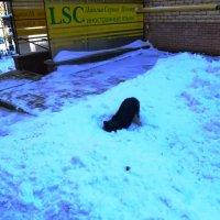 Какое счастье - снег в апреле! :: Mary Коллар