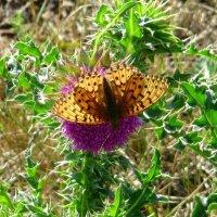 Бабочка :: Вера Щукина