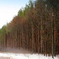 Холодные туманы апреля.. :: Андрей Заломленков