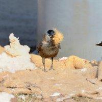весенние хлопоты :: linnud