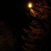 Ночь.Улица.Фонарь. :: Ирина