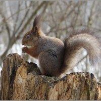 ...и орешки все грызет. :: Николай Панов
