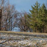 Весна в парке. :: Владимир Безбородов