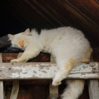 Под крышей дома своего. :: Валентина Налетова