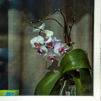 Цветок на окне. :: Анатолий. Chesnavik.