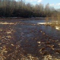 на реке Тихвинка :: Сергей Кочнев