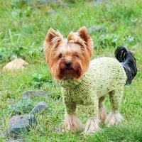зелёная модница :: Александр Прокудин