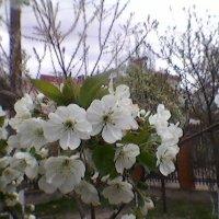 Весна в Україні! :: Миша Любчик