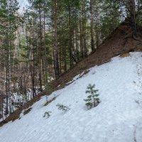Лесной овраг :: Вера