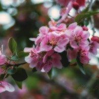 Весна. :: Александр Криулин