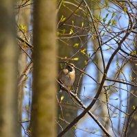 весеннее :: linnud