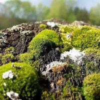 В горах древесных разложений :: Валерий Розенталь