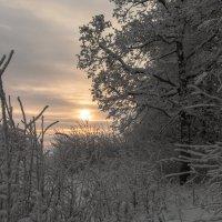 Зимние утро :: Александр Солуянов
