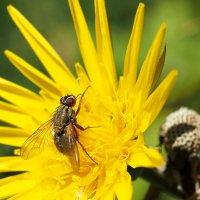 На солнечном цветке :: Swetlana V