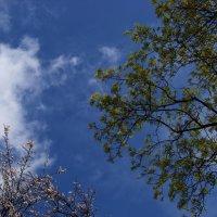 Взгляд в апрельское небо...) :: Любовь К.