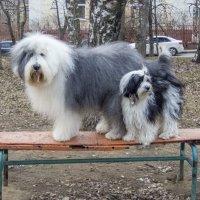 Чистенькие Маня и Бия :: Лариса Батурова