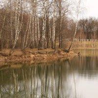 Неброские краски апреля :: Татьяна Ломтева