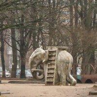 Весенний слон. Соскучился. :: Владимир Гилясев