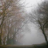 утренний туман :: Ingwar