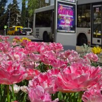 Когда в городе весна... :: СветЛана D