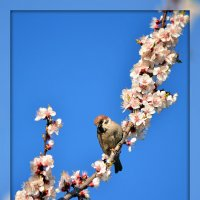Крылатая весна... :: Татьяна Евдокимова