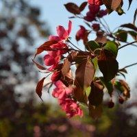 Весна :: Лилия П.