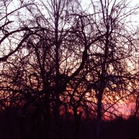 В паутине ветвей притаился закат :: Елена Милая