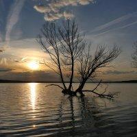 Большая вода :: галина северинова