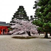 Киото у Храма Хэйан-дзингу :: Swetlana V