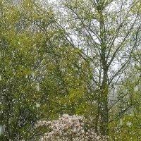 Апрельская зима :: Валерий Розенталь