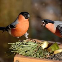 разборки :: linnud