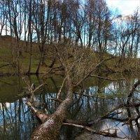 река Теча, Павлищев Бор, Калужская область :: Роман Воронцов
